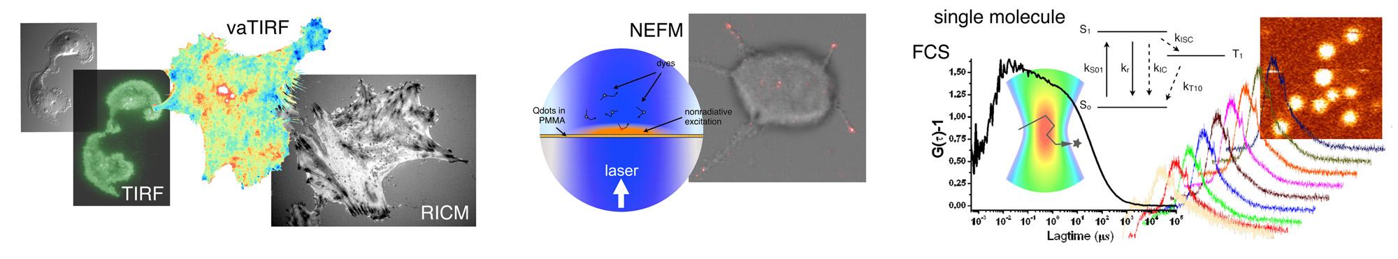 bandeau nanobio